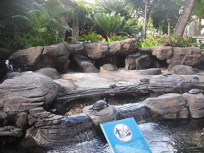 2-5-2012 Hawaii