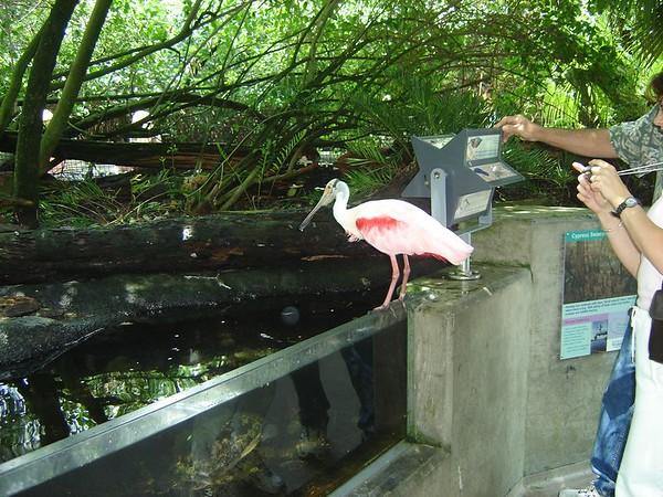 1 FL Aquarium 22