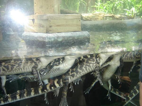 1 FL Aquarium 14