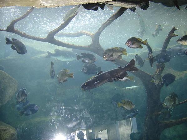 1 FL Aquarium 10