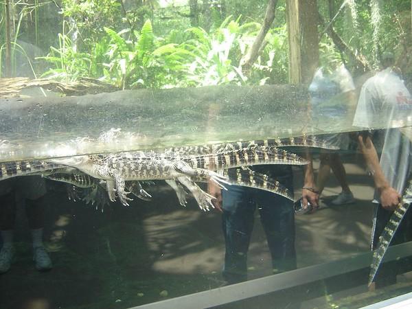 1 FL Aquarium 12