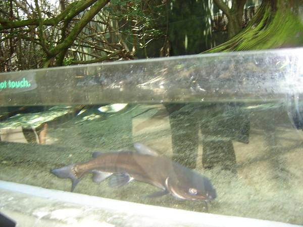 1 FL Aquarium 20