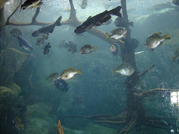 1 FL Aquarium 09