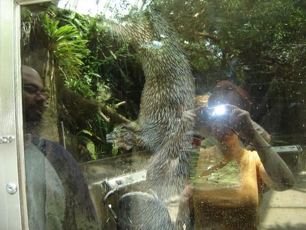 1 FL Aquarium 18