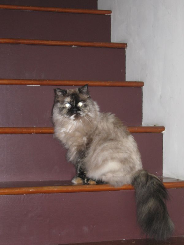 Coco on the stairs