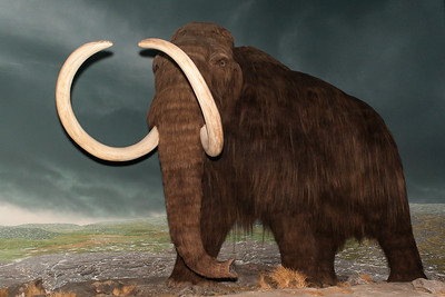 Mammoth - Royal BC Museum