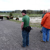 Heard of bison where crossing the road, they took their sweet time.