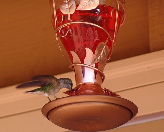 Steve & Vicki have lots of hummingbirds on their deck