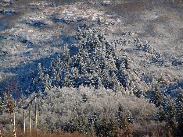 A Christmas tree of Christmas trees