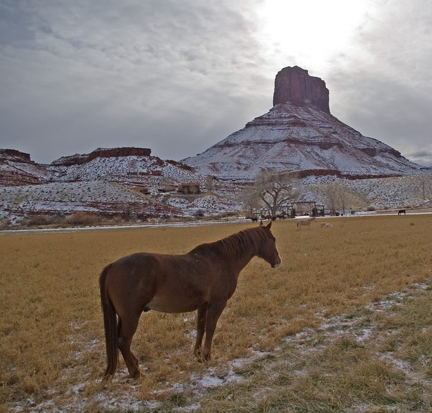 Horse at Sorrel River Ranch.