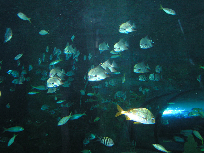 Photo from the Ripley's Aquarium @ Broadway at the Beach