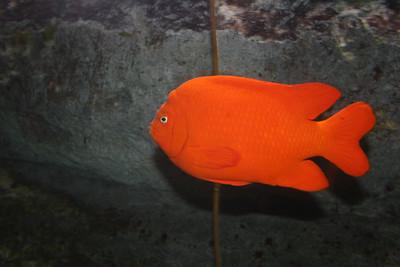 2007 Omaha Zoo