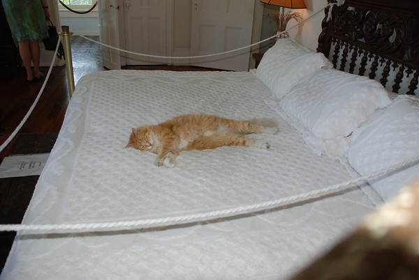 A decendent of Hemingway's six-toed cat, Snowball.  This cat is 18 yrs and sleeps on the bed all day.