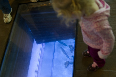 Beverly looking at the fish in the aquarium below