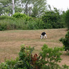 This pooch was playing fetch with a soccer ball - up and down a steep hill which comprised the home's front yard