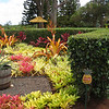 They had beautiful plants and flowers at the Dole plantation.
