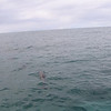 Next we came upon the spinner dolphins.