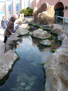 A tide pool at the Birch Aquarium.