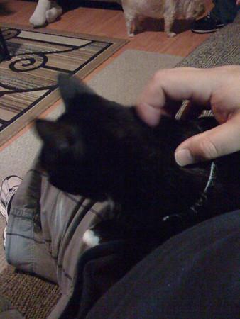Tamara's cat Moma takes a liking to me.