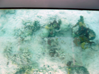 A view from the glass bottom boat.  We were often in shallow water.