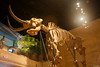 """Mastadon at the Answers In Genesis Creation Museum. More 2009 from our 2009 visit can be seen at <a href=""""http://bit.ly/12eXY2"""">http://bit.ly/12eXY2</a> and from our 2007 visit at <a href=""""http://bit.ly/4mhv39"""">http://bit.ly/4mhv39</a>."""