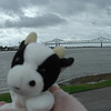 Mr. Cow at the Mississippi