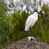 San Diego Zoo's Wild Animal Park San Diego, CA