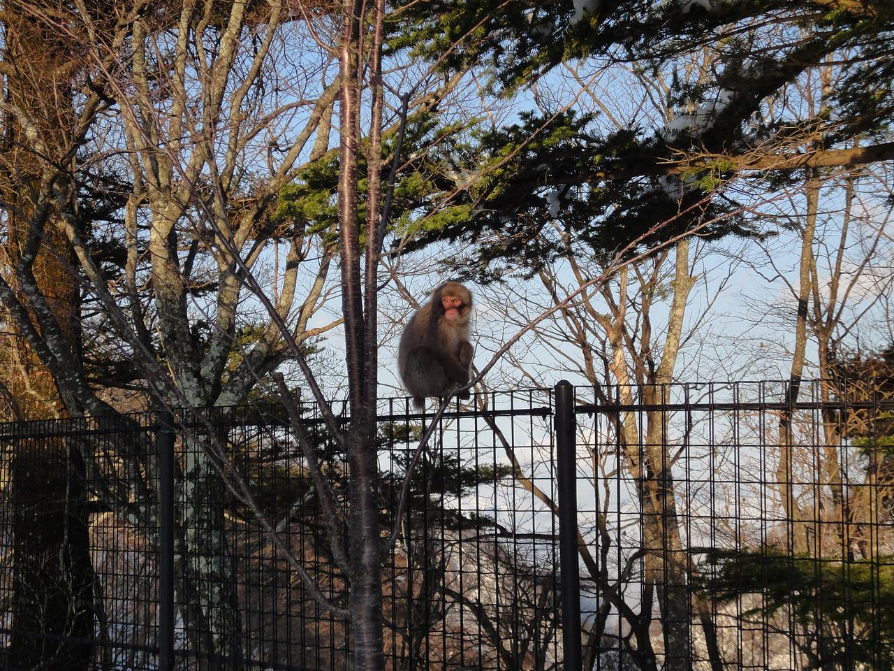 2010-04-17 Edo-world Nikko (424)