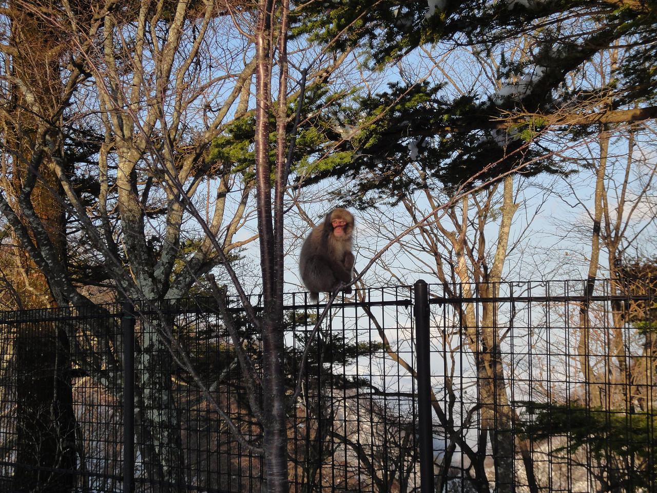 2010-04-17 Edo-world Nikko (426)