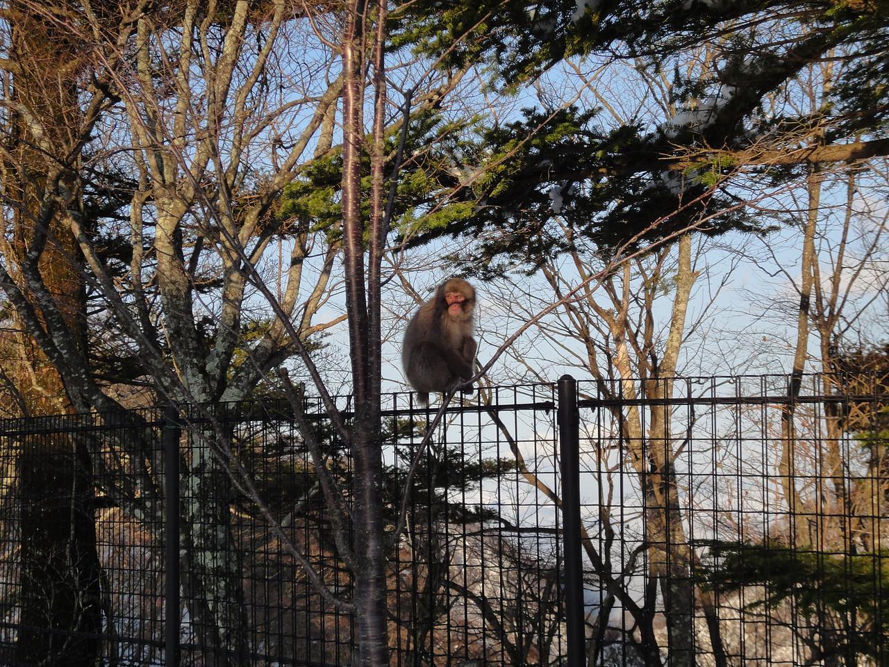 2010-04-17 Edo-world Nikko (425)