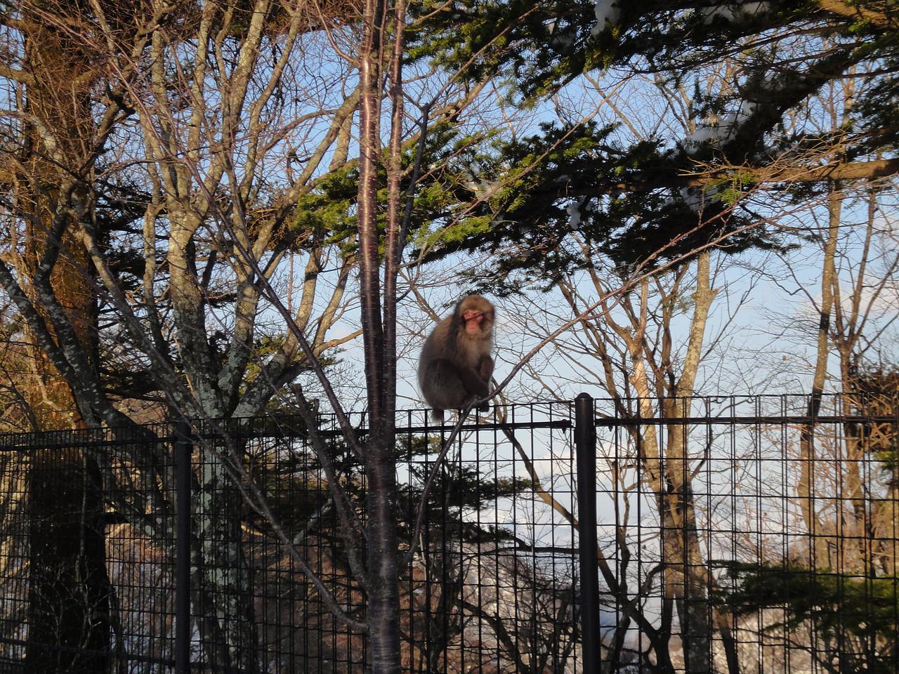 2010-04-17 Edo-world Nikko (428)
