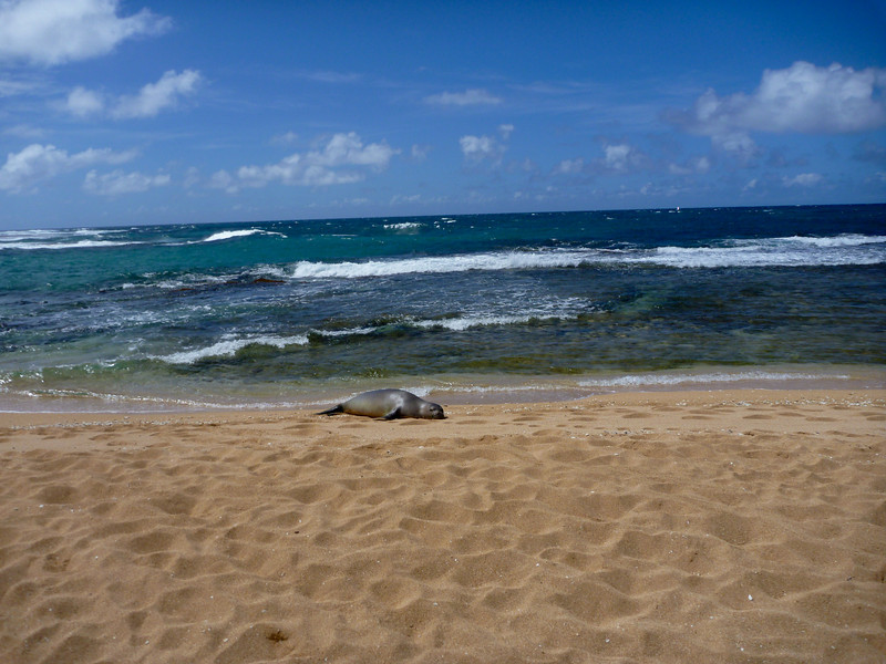 Seal taking a nap