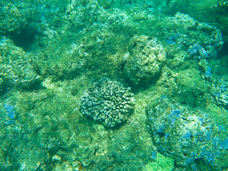 Tim said this coral was a beautiful purple