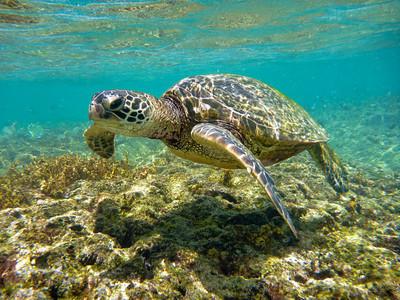 2010 Kauai Day 5