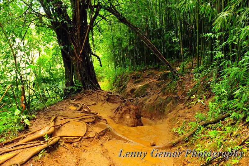 A very muddy trail.