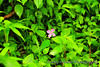 """""""The Lonely Flower""""<br /> A pretty pink flower alone in a sea of green. Poor little fella."""