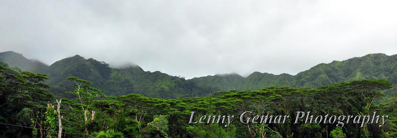 Canopy trees across the Manoa Falls valley.