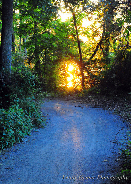 """""""Come into the light, come into the light.""""<br /> Point Mallard hiking trail looking west."""