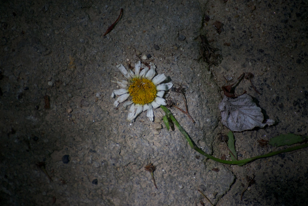 _2011-06-15_14-54-45_IMG_0636_©EdwardWei2011