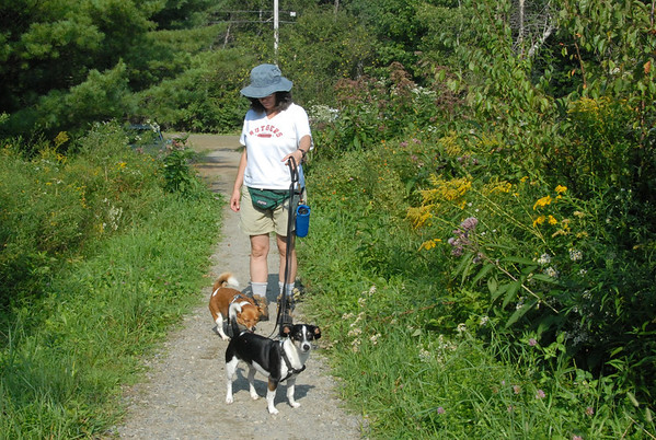 2011-09-04 Dog Camp - Hike from Pinnacle Rd, Stowe VT