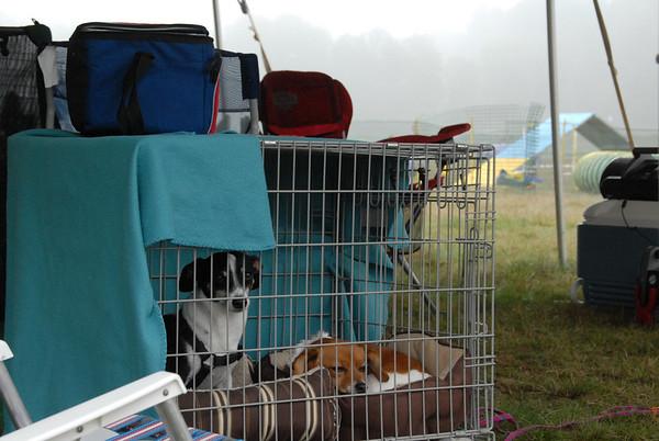 2011-09-09 Dog Camp - Agility and Frisbee