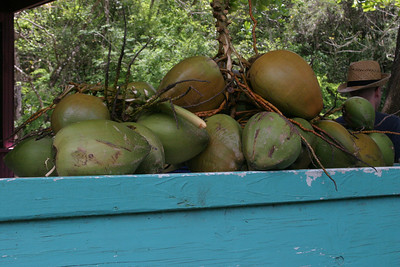 Inside the rainforst on Antigua.  These are coconuts.