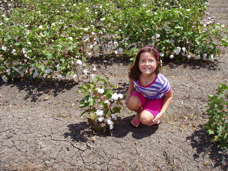 Audrey checks out a cotton plant on the way to Corpus