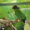 Why is there a parrot in an aquarium?