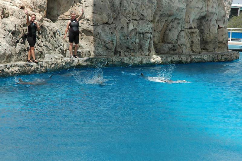 dolphins waving hello