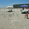 Audrey feeding the seagulls