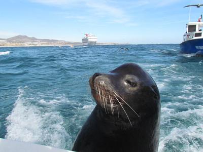 2011 trip to Cabo san lucas (Dec)