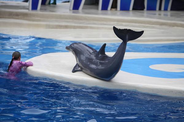 2011 Sea World Blue Horizon Dolphin Show
