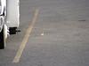2011-07-16-182657-SX100 IS-1719