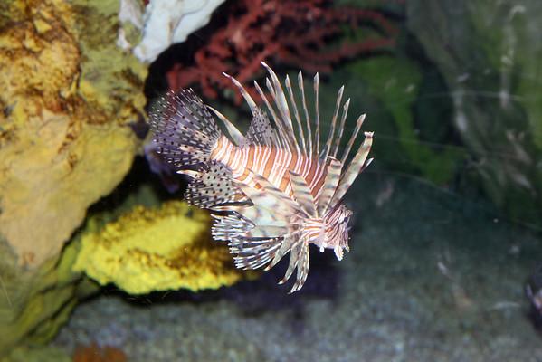 2011 Sea World Aquarium